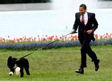 Bo-Obama