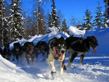 Iditarod-33022286