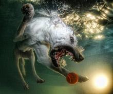 hund unter wasser2