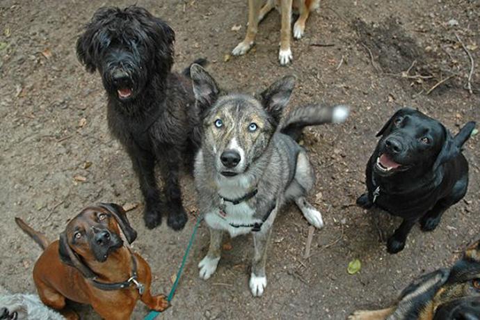 Rudelstellung bei Hunden
