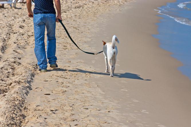 Hund läuft an der Leine