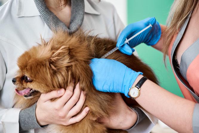 Impfen bei Hunden