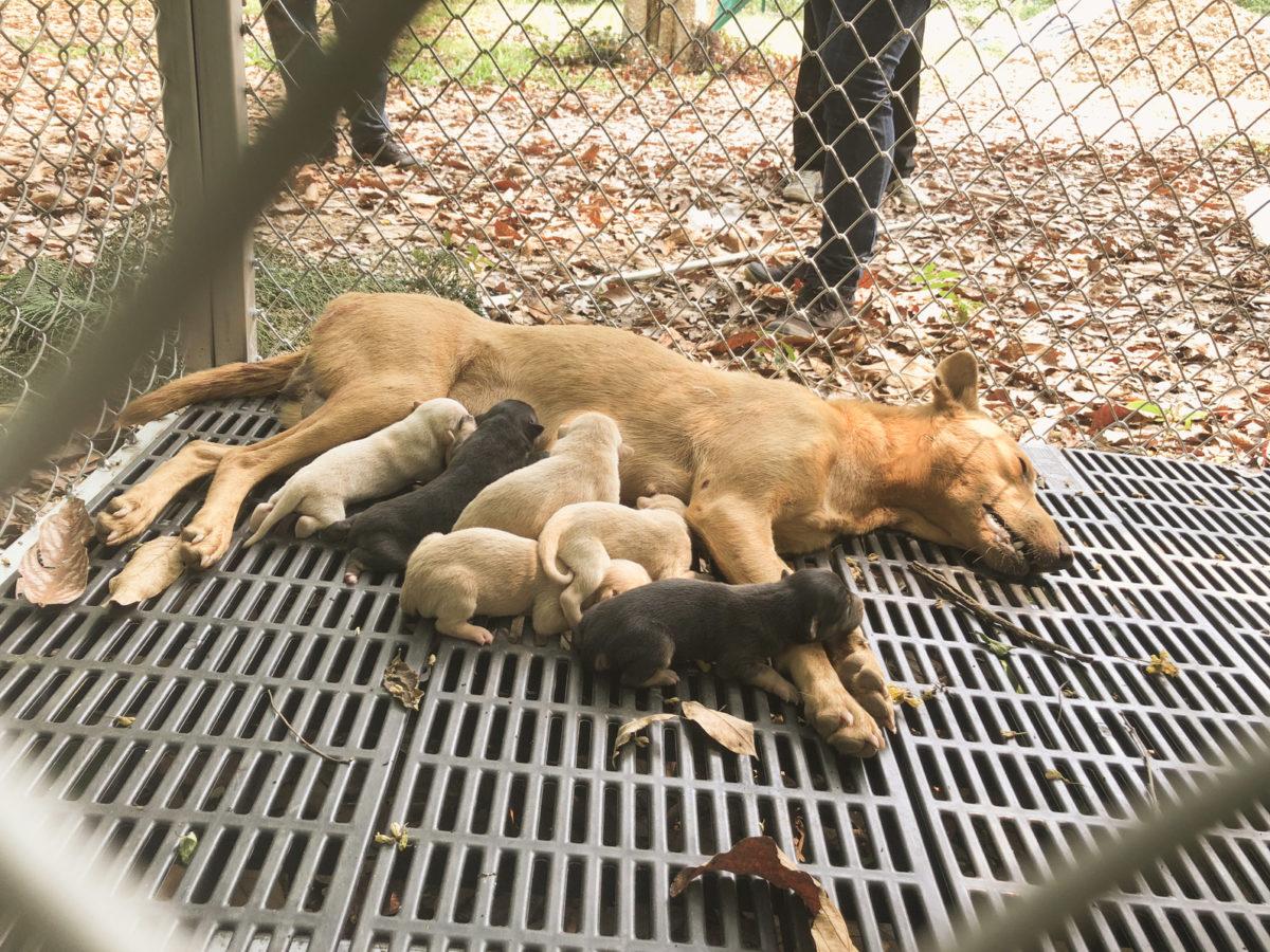 Impfungen bei Hunden